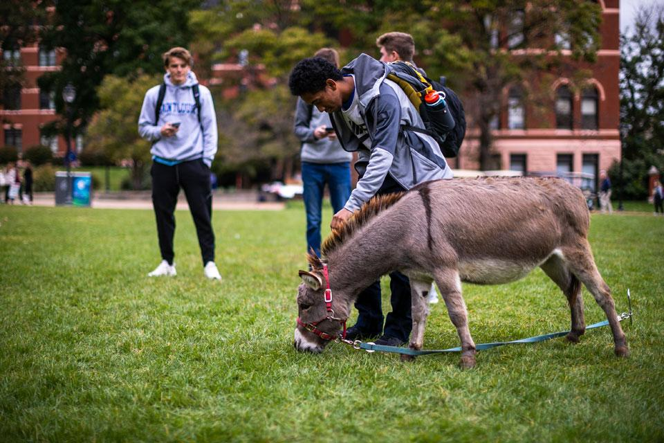 A student takes some time out from studying to spend time with a miniature donkey from the petting zoo the Students Activities Board (SAB) brought to campus on Wednesday, Oct. 16.