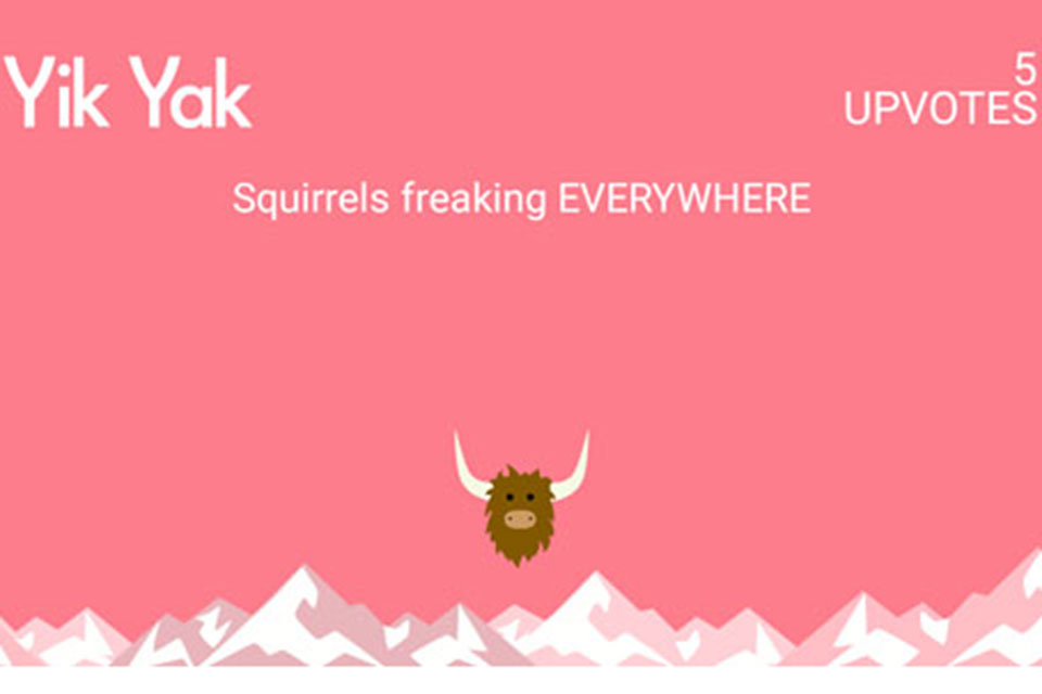 Squirrel yik yak