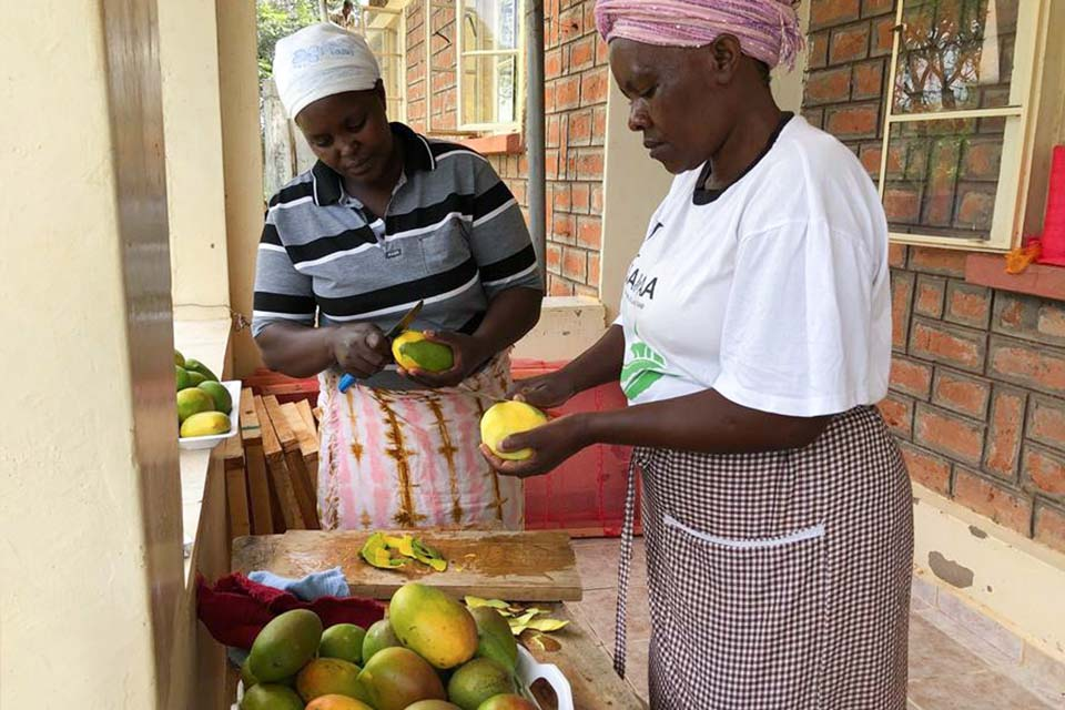 Women in Kenya prepare mangoes for dehydration using a solar-powered dehydrator.