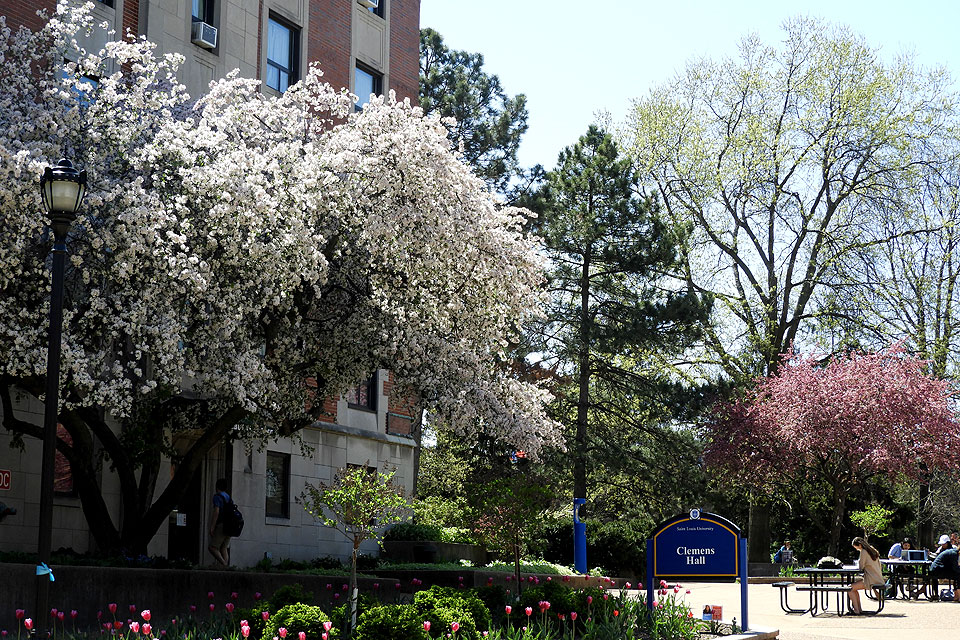 SLU's campus forest in bloom