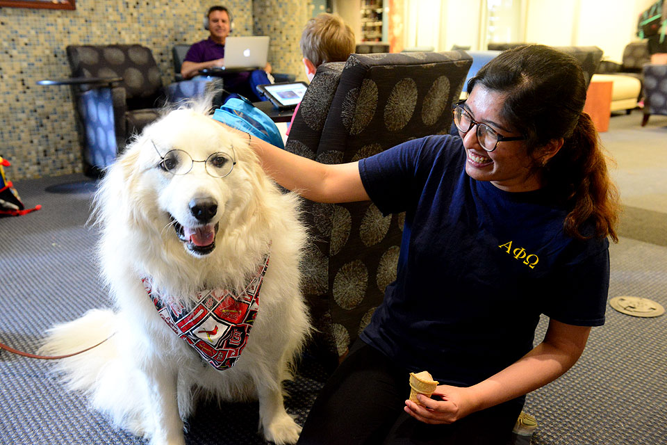 Therapy dogs at Pius