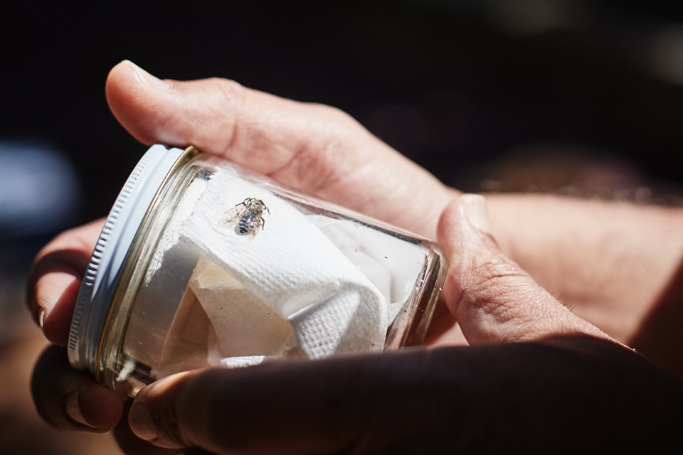Jar containing a mining bee
